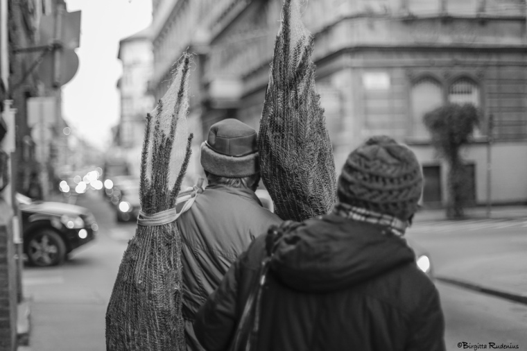 Street Photo - He & She bringing home the fir tree.